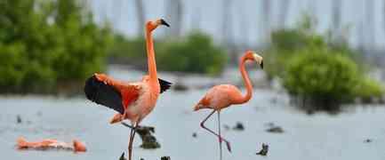 Kuba-Urlaub für Naturfreunde: die Zapata-Halbinsel